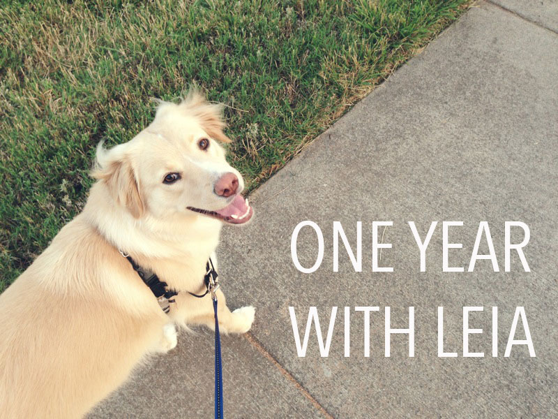 One-year-with-Leia